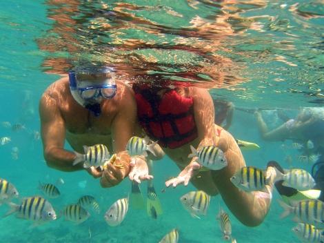 catalina-island-snorkeling